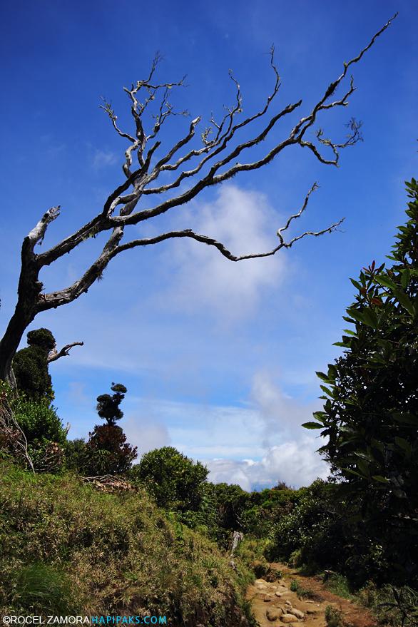 Ambangeg trail